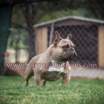 Our Precious Rhino